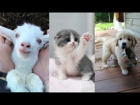 Cute baby animals Videos Compilation cute moment of the animals – Soo Cute! #13