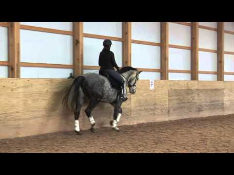 Fiesta - $15,000 Fancy First Dressage Horse 16.1 10 Year Old Dappled Gray Mare