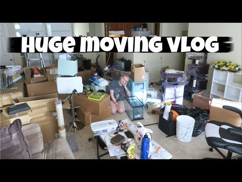 ✨MOVING INTO MY NEW APARTMENT✨ | VLOG |