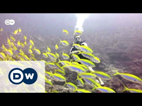 Bombing coral to catch fish | Eco-at-Africa