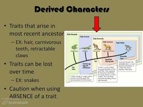 Modern Evolutionary Classification - YouTube