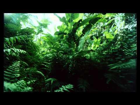 SDDS - Underwater - Jungle - Volcano - 35mm - HD