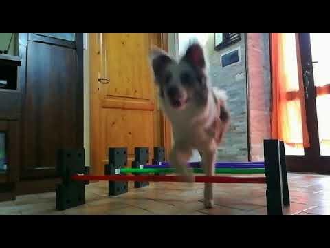 DogStepper e Dog Dance: esercizi con Lusy Imbergerova