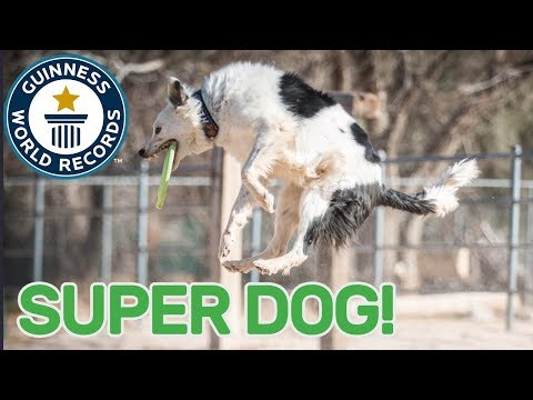 Most tricks performed by a dog in one minute – Guinness World Records