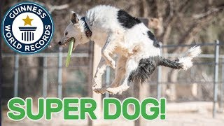 Most tricks performed by a dog in one minute  Guinness World Records