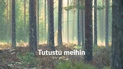 Metsämiesten Säätiö