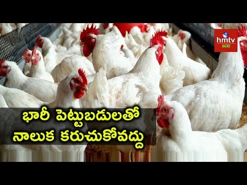 Poultry Farming -  Success Story of A Poultry Farmer | hmtv agri