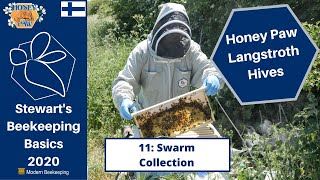 Honey Paw Series: 11 - Swarm Collection Update - Stewart Spinks at the Norfolk Honey Co.