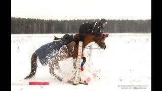 топ приколы с лошадьми...
