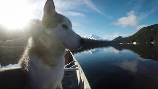 GoPro: Loki The Wolfdog - Ode To Father's Day