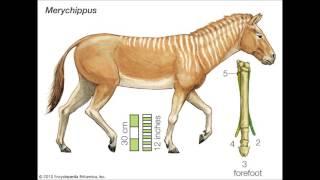 Del árbol de caballo evolución