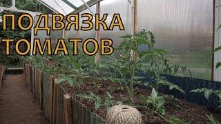 Подвязка томатов в теплице(Начало июня - время подвязывать томаты в теплице. Ставьте лайки, комментируйте видео! Мой канал http://www.youtube.com/..., 2014-06-07T05:25:32.000Z)