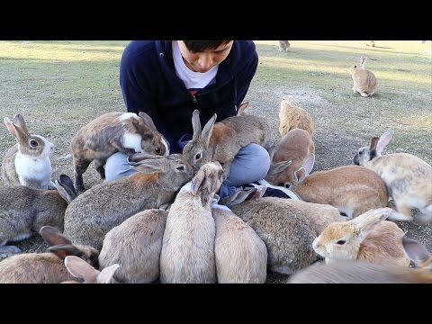 Bunnies Go Crazy For This, On Japan's Rabbit Island