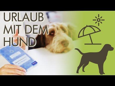 Urlaub mit dem Hund: Nicht ohne DIESE Vorbereitungen