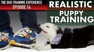 How I'm Getting My Crazy Puppy Under Control!