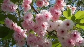 Primavera Magica (Magical Spring) Thumbnail