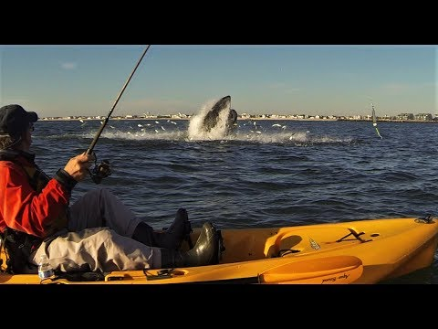 New Jersey Kayaking with Humpback Whales and Dolphins