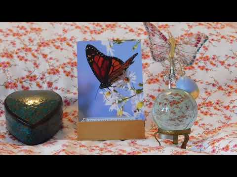 Daily Butterfly Oracle Card Reading