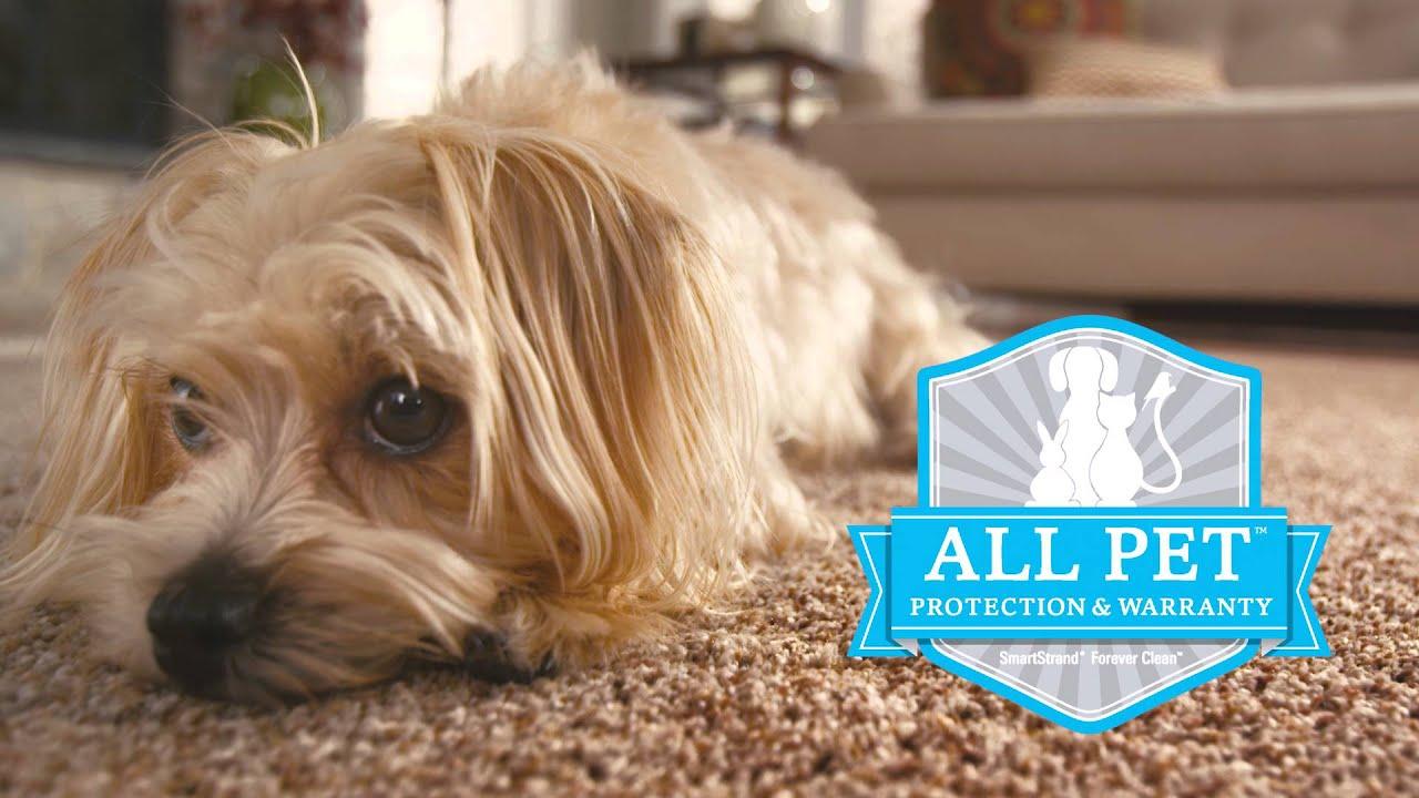 Best Carpet for Pets: SmartStrand Forever Clean - YouTube