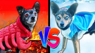 Hot Vs Cold Dog Food Challenge to Win First Date with Crush! Pawzam Dogs