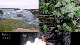 Разъяснение на тему того, какие живые существа первыми вышли на сушу