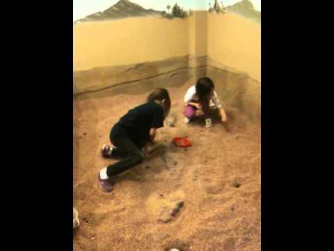 Digging Up Fossils!