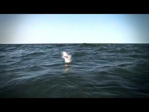 Chasing Silver: A Tarpon Journey