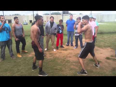 Gainesville fights