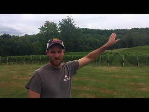 Showing off the vineyard and wines at New Jersey's Alba Vineyard