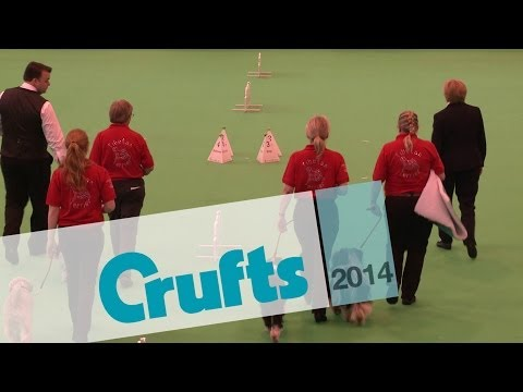 Obreedience | Set Exercise | Team Tibetan Terrier | Crufts 2014