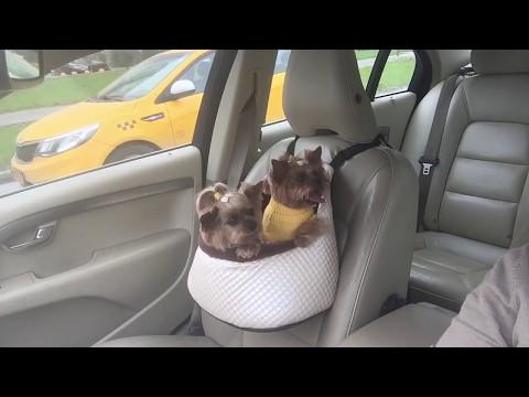 Клепа и Мона в автоперевозке