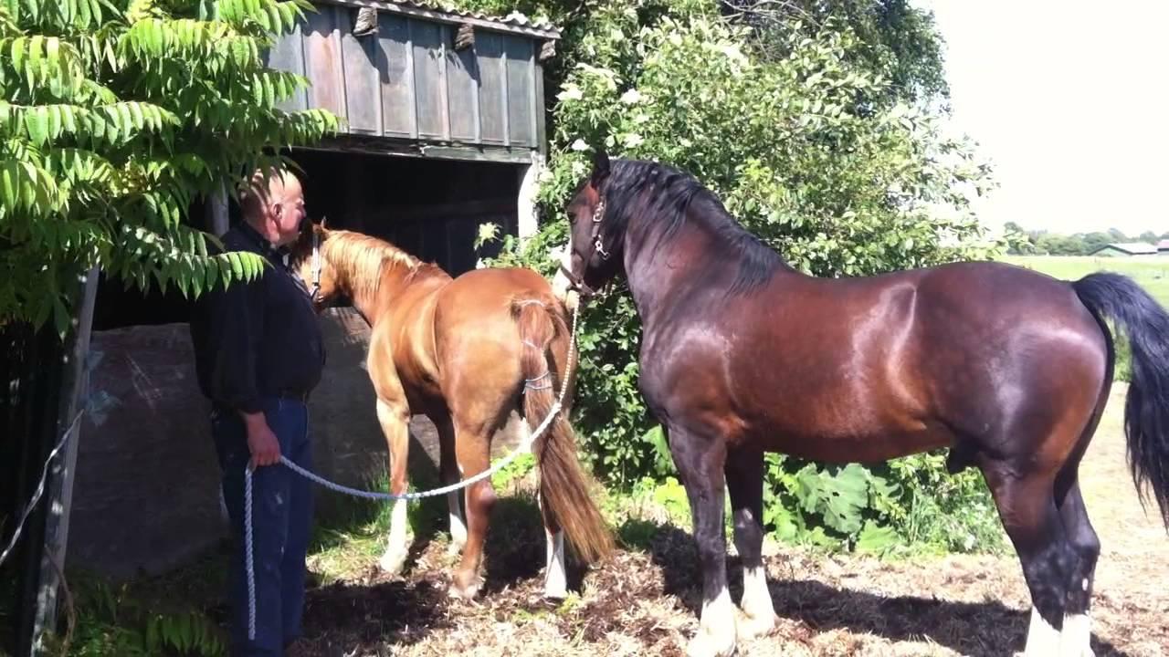 hestebedækning