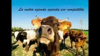 AGRITURIST - Agriturismo La Buona Terra - Cervarese di Santa Croce (Padova)