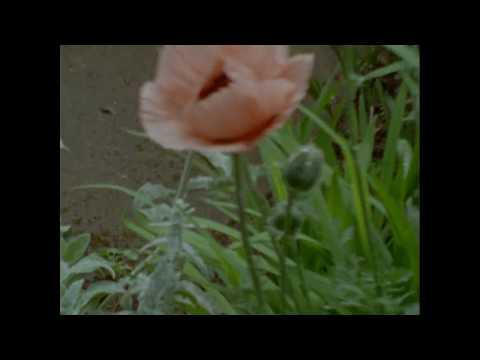 "Counterparts ""Bouquet"" Music Video"