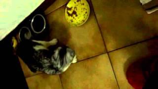 Кошка зарывает еду  (жаль что мы ее все равно видим =D )