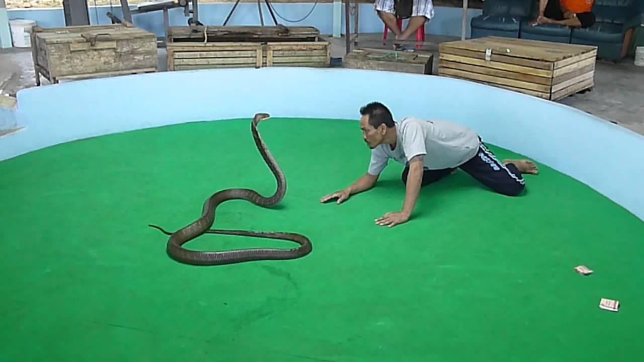 Phuket Taxi Private | Snake Show | Tours - City Tours Phuket