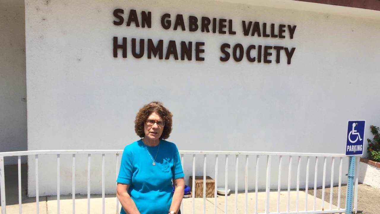 1 Introduction To San Gabriel Valley Humane Society Youtube