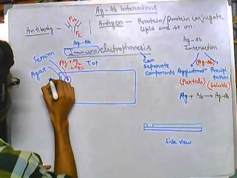 Immunoelectrophoresis