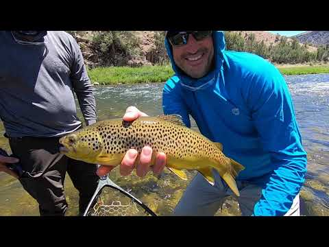 Fly Fishing The Gunnison Gorge Of The Black Canyon June 2020