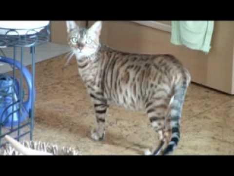 Wie Lang Sind Katzen Schwanger