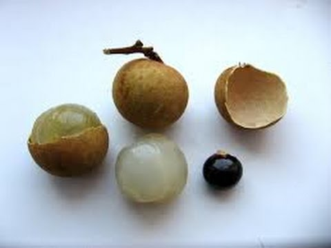 My longan planted from seeds: 2 methods