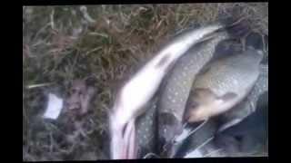 рыбалка 31 января 2015 х железный