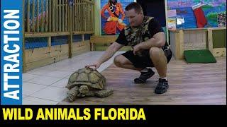 Wild animals in Florida dangerous species gators turtles manatees lizards by Jarek Tampa Bay USA