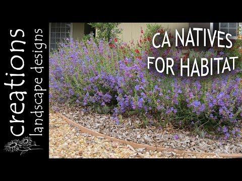 Top 3 California Native Plants For Habitat Gardening