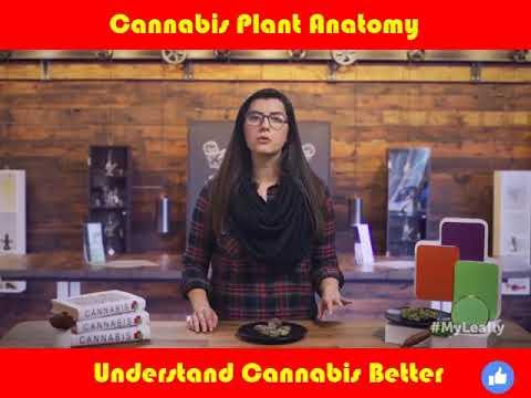 Cannabis 101: Plant Anatomy - YouTube