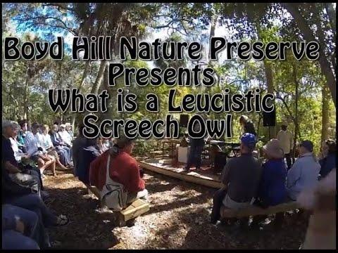 Leucistic Screech Owl, Boyd Hill Nature Preserve
