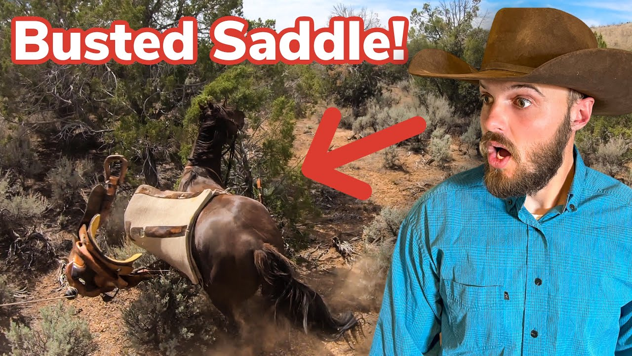 I Lost an EXPENSIVE Stallion! (Wild Chase Gone Wrong!)