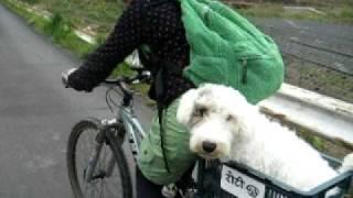 シーリハムテリアのロティとサイクリングに行ってきました。 おとなしく...