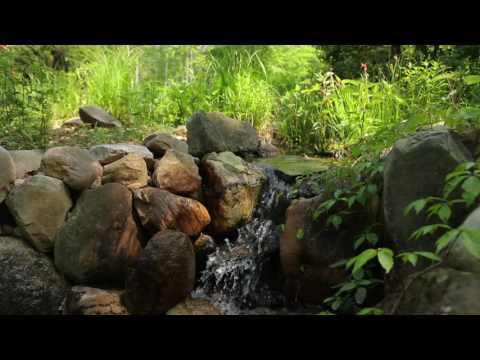 How To Add a Frog Pond to Your Landscape