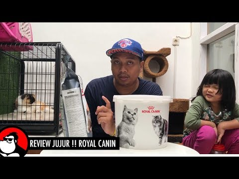 ROYAL CANIN - Review Jujur Makanan Kucing